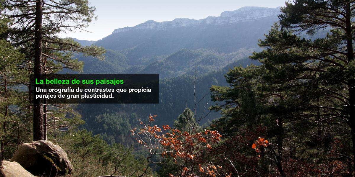 LA METROPOLI VERDE ESTRATEGIA COMUNICATIVA 05